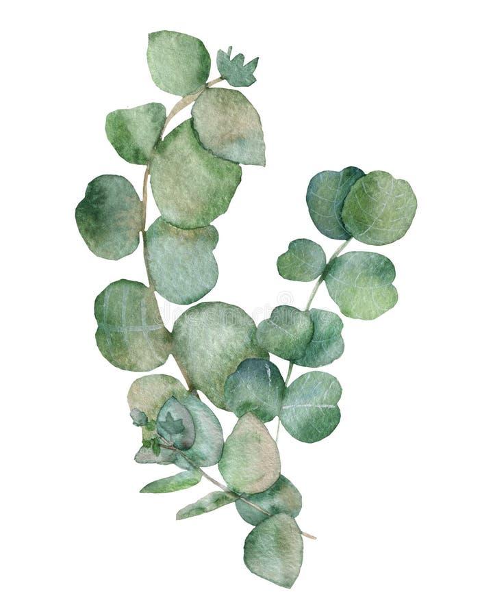 Boeket van eucalyptus op een witte achtergrond Waterverftakken en verse eucalyptusbladeren De hand schilderde geneeskrachtige ins royalty-vrije illustratie