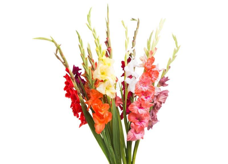 boeket van geïsoleerde gladiolen stock fotografie
