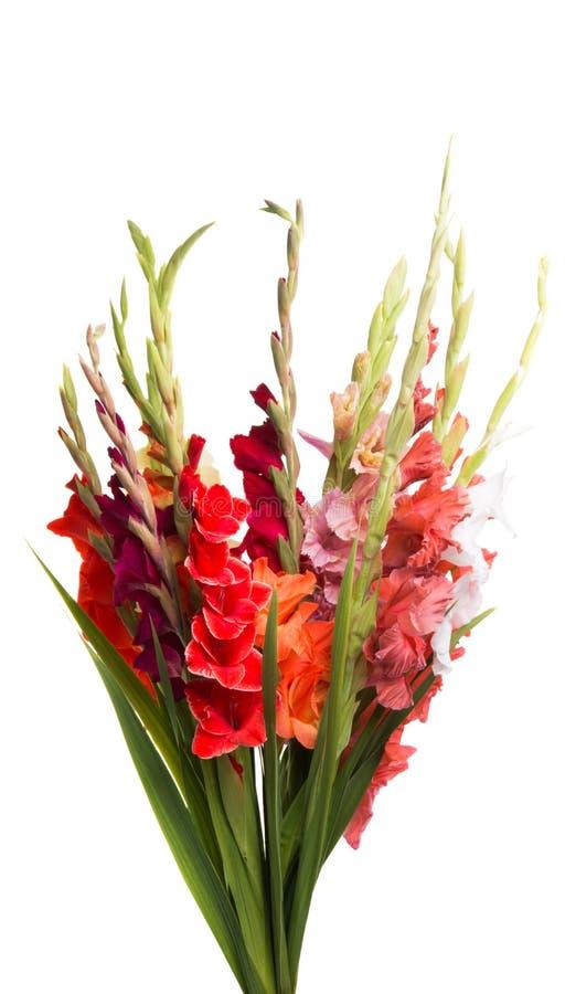 boeket van geïsoleerde gladiolen stock afbeeldingen