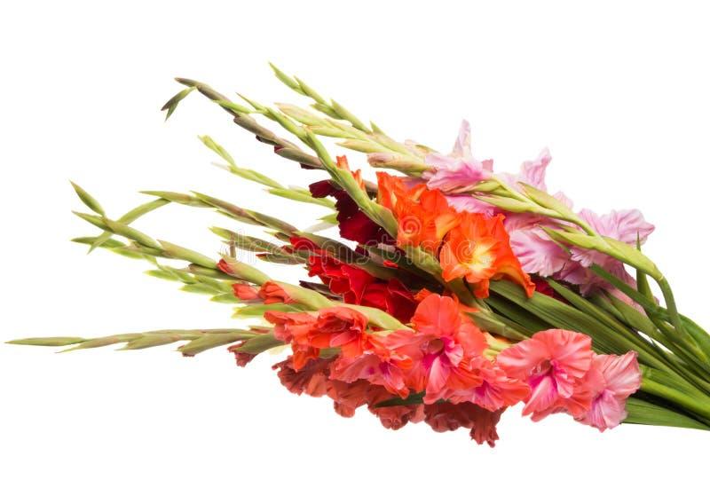 boeket van geïsoleerde gladiolen royalty-vrije stock afbeeldingen