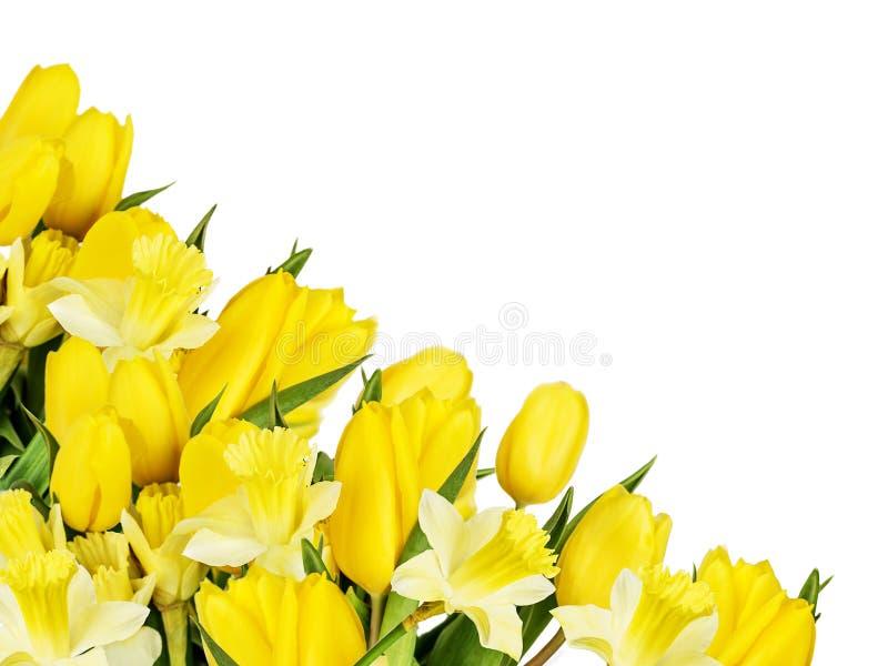 Boeket van gele die tulpen en gele narcissen op een witte achtergrond worden geïsoleerd royalty-vrije stock afbeeldingen
