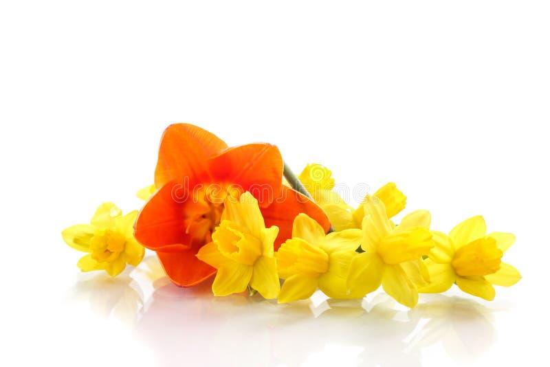 Boeket van gele gele narcissen met kleine tulpen royalty-vrije stock fotografie