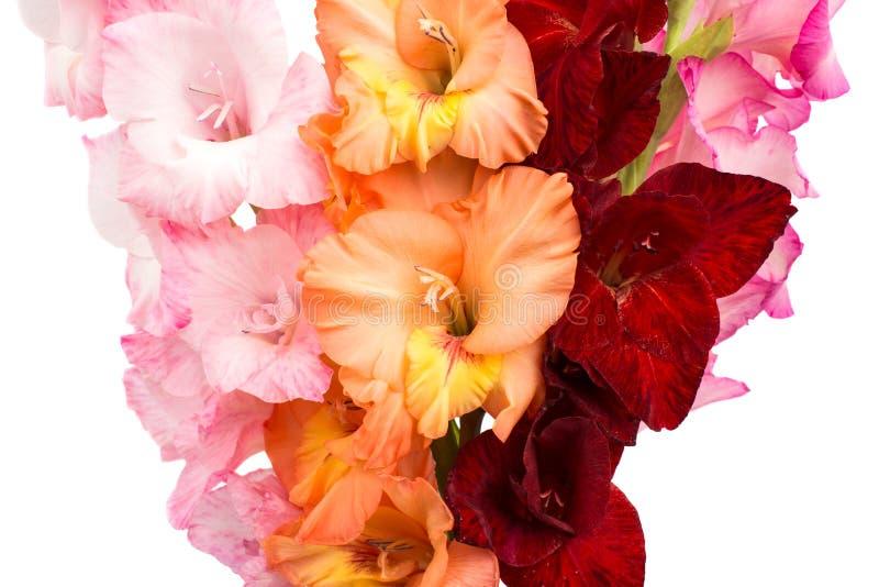 Boeket van Gladiolen stock afbeeldingen