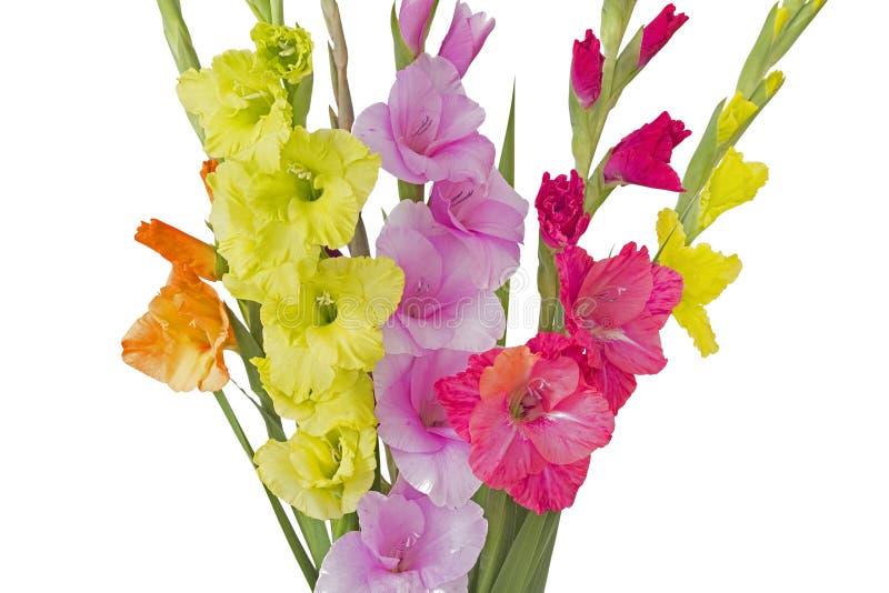 Boeket van gladiolenbloemen in de zomer royalty-vrije stock foto's