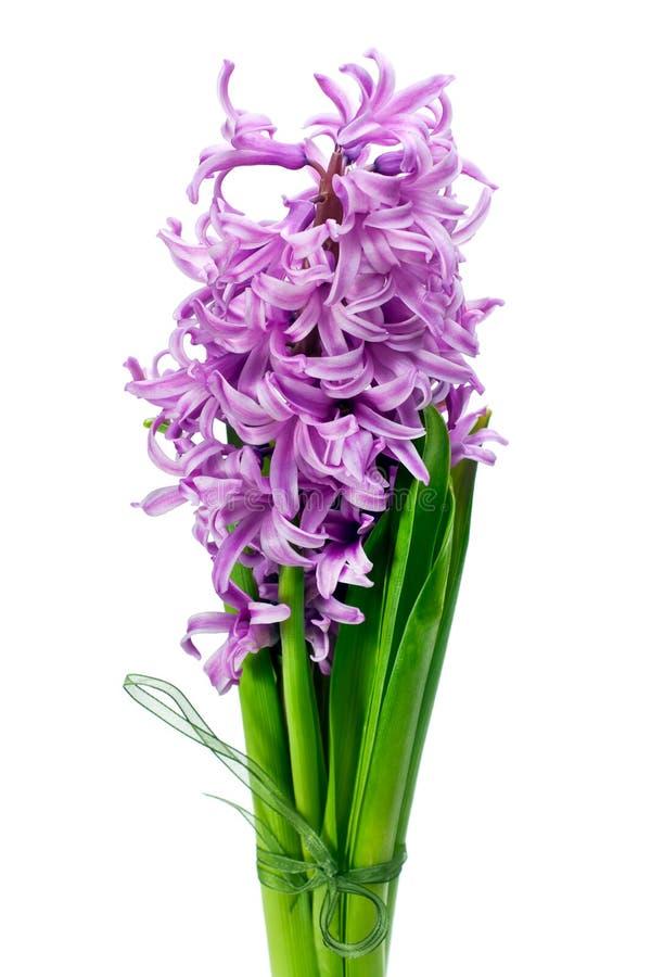 Boeket van hyacint die op wit wordt geïsoleerde stock foto's