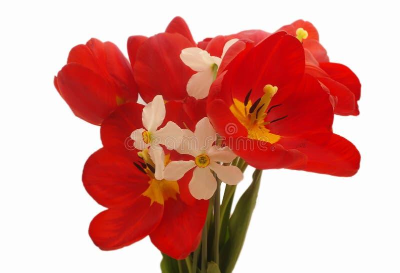 Boeket van kleurrijke de lentebloemen van tulpen en narcissen op een zuivere witte achtergrond stock afbeelding