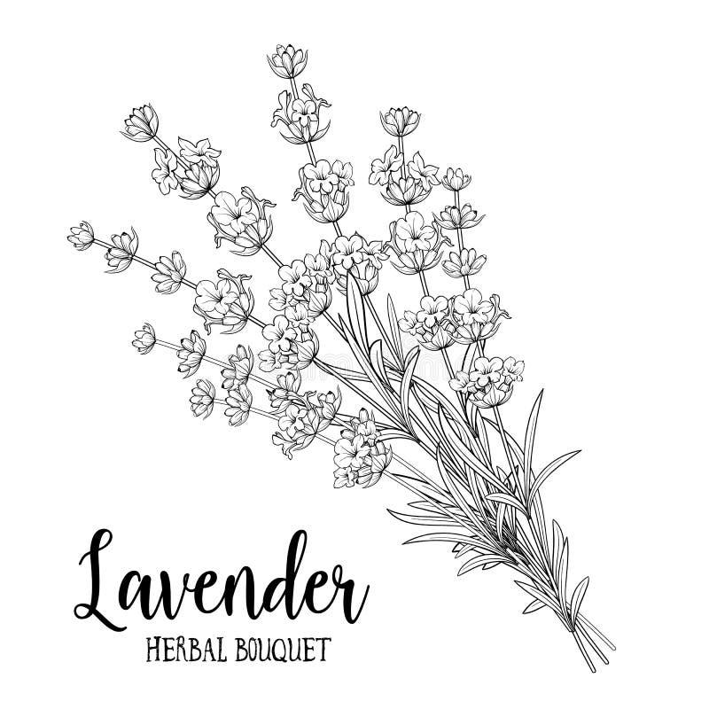 Boeket van lavendelbloemen stock illustratie