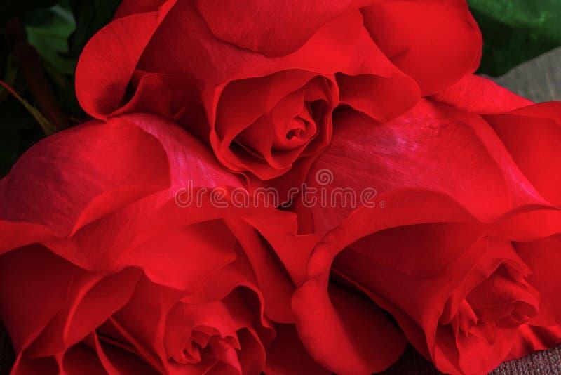 Boeket van levend rood of scharlaken rozenclose-up, bloemenachtergrond stock fotografie