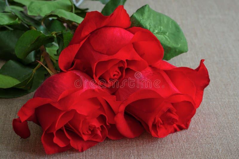 Boeket van levende rode of scharlaken rozen met groene bladeren op de bedelaars royalty-vrije stock fotografie