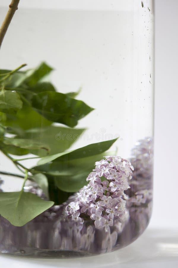 Boeket van lilac takjes in een transparante groene glasvaas op het venster royalty-vrije stock afbeeldingen