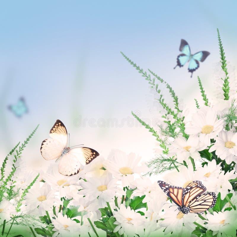 Boeket van margrieten en een vlinder royalty-vrije stock foto