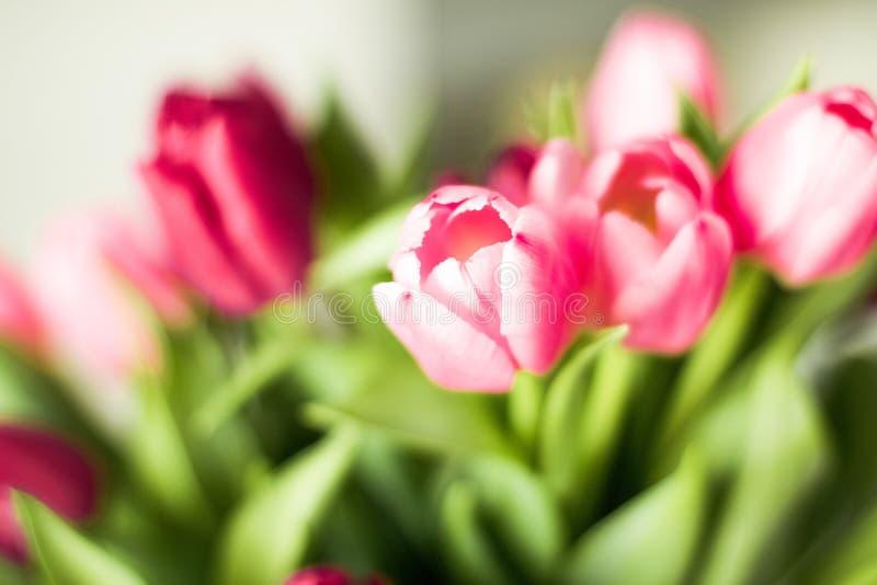 Boeket van mooie tulpen, bloemenachtergrond royalty-vrije stock afbeeldingen