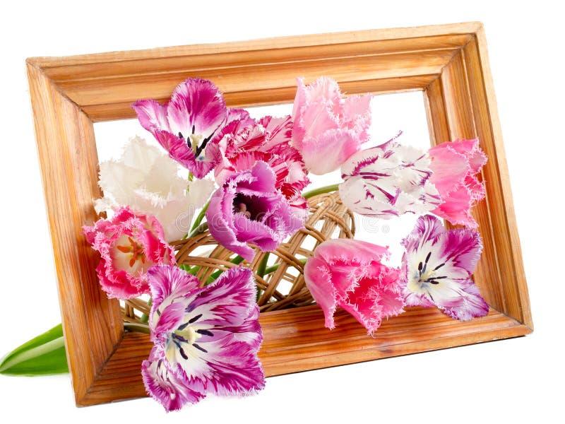 Boeket van omzoomde tulpen royalty-vrije stock afbeelding