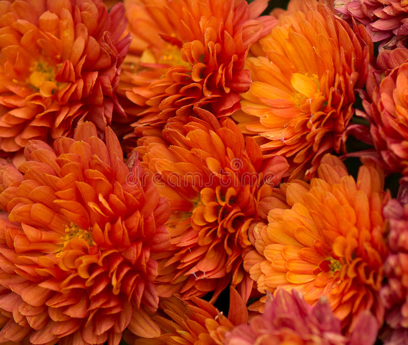Boeket van Oranje Gerbera Daisy royalty-vrije stock fotografie