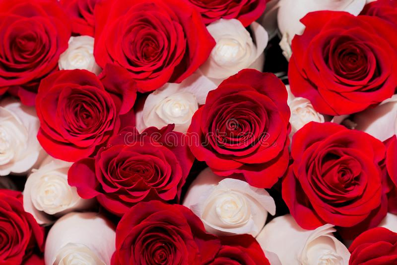 Boeket van rode en witte rozen, het concept Romaans of huwelijk stock afbeelding