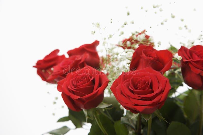 Boeket van rode rozen. royalty-vrije stock afbeelding