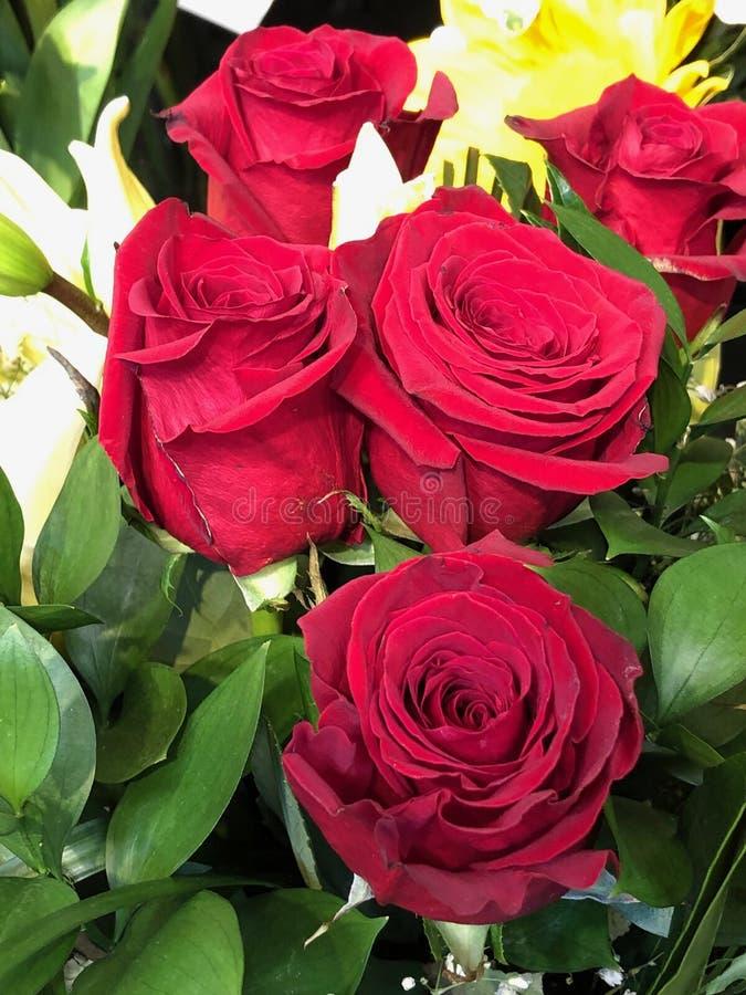 Boeket van rode rozen royalty-vrije stock foto's