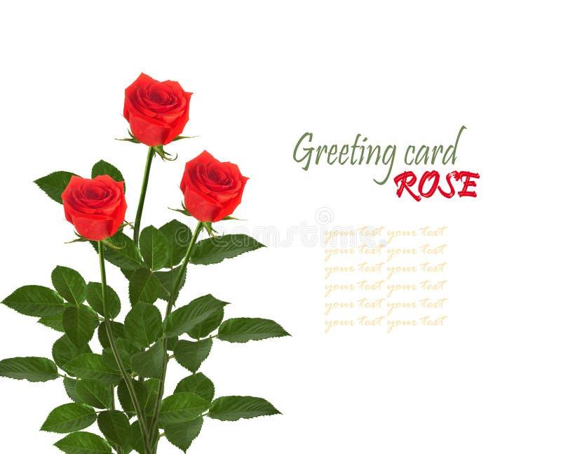 Boeket van rode rozen met groene bladeren stock foto