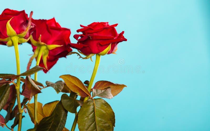 Boeket van rode rozenbloemen op blauw stock foto