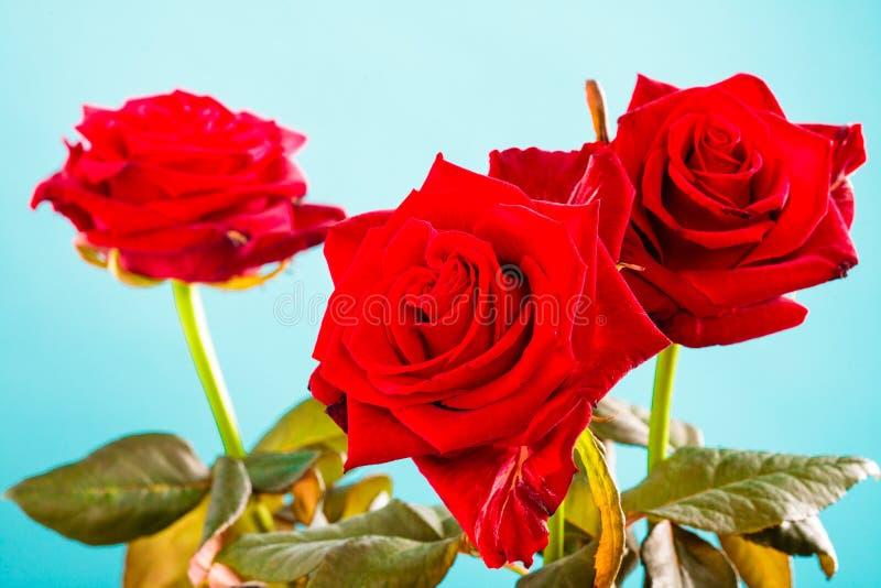 Boeket van rode rozenbloemen op blauw royalty-vrije stock afbeeldingen