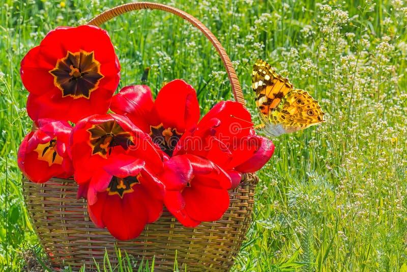 Boeket van rode tulpen in een mand en een vlinder royalty-vrije stock foto's