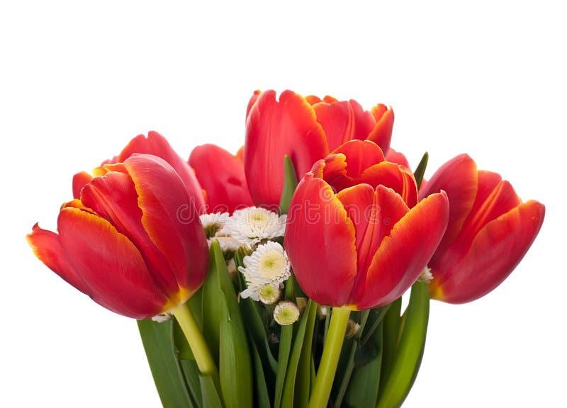 Boeket van rode tulpen op een wit royalty-vrije stock foto