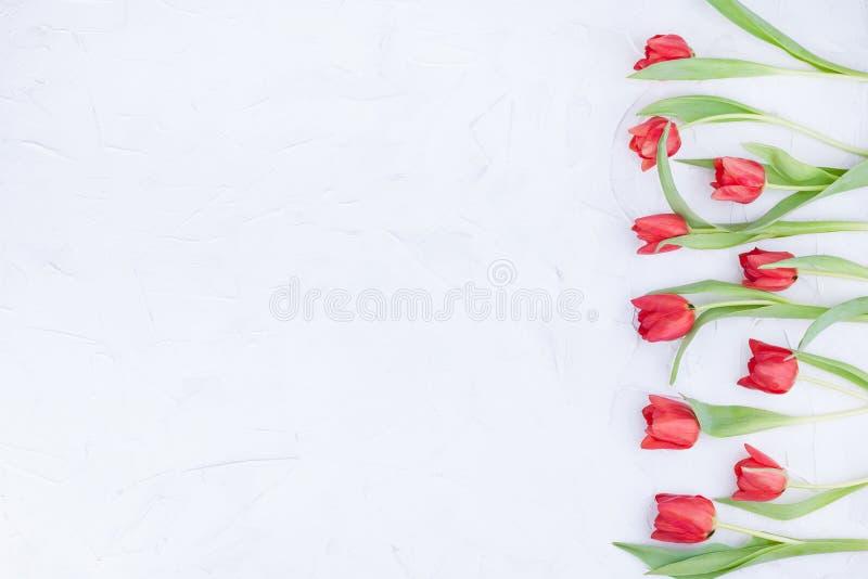 Boeket van rode tulpen op een witte achtergrond Vrije ruimte voor tekst royalty-vrije stock afbeeldingen