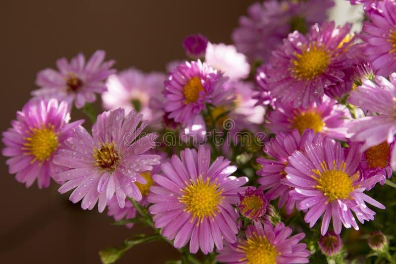Boeket van roze bloemen stock afbeeldingen