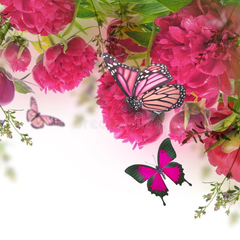 Boeket van roze pioenen stock foto