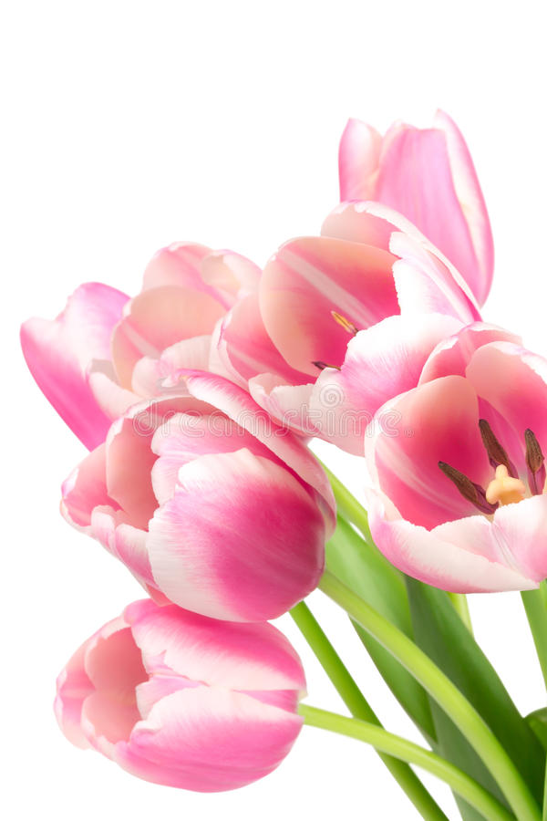 Boeket van roze tulpen stock foto