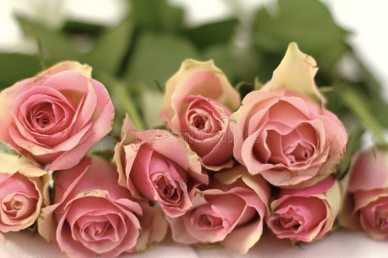 Boeket van roze vernietigde rozen royalty-vrije stock fotografie