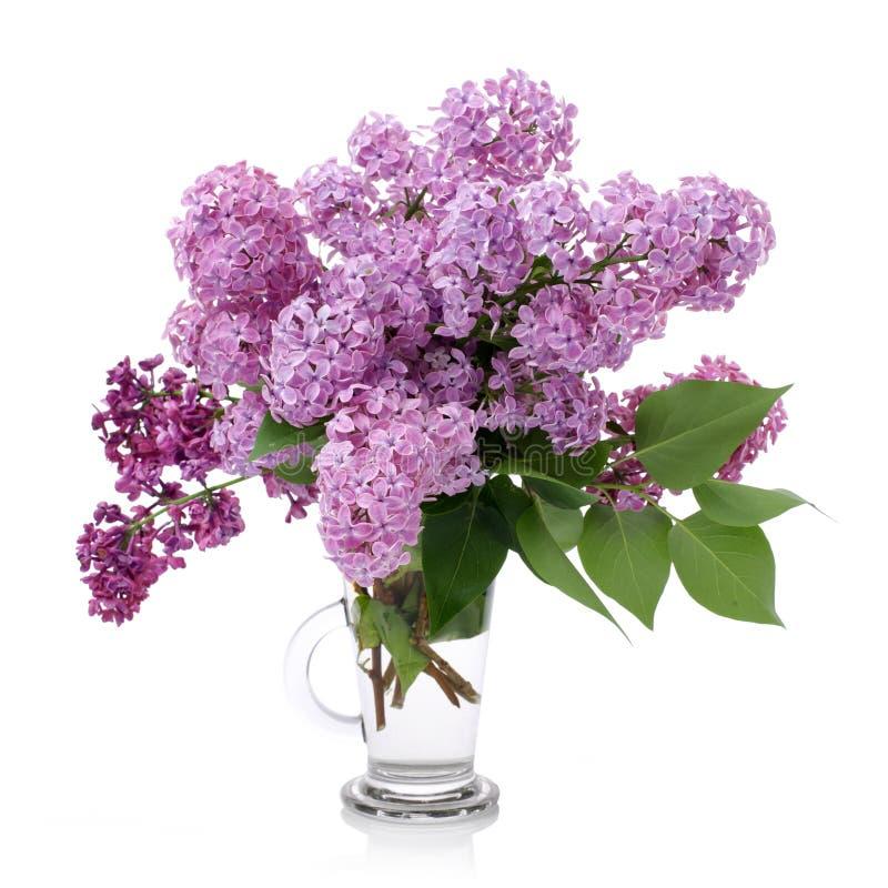 Boeket van Seringen in een Glasvaas op wit wordt ge?soleerd dat Tak met lilac bloemen stock foto's