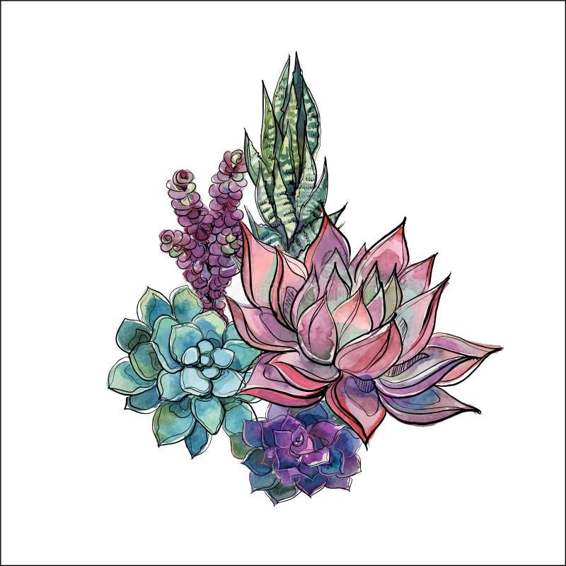 Boeket van succulents Bloemstuk voor ontwerp watercolor grafiek Vector royalty-vrije stock foto's