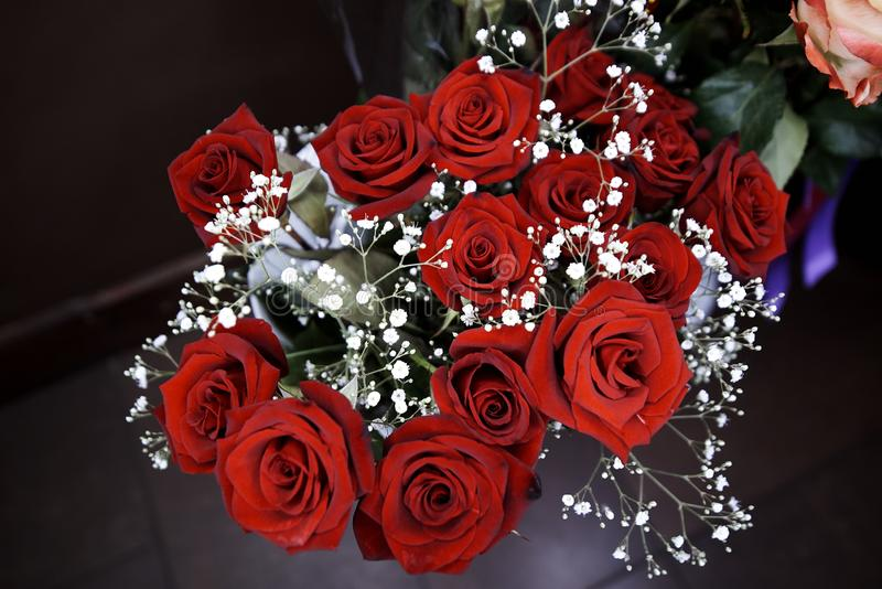 Boeket van tot bloei komende donkerrode rozen royalty-vrije stock afbeeldingen