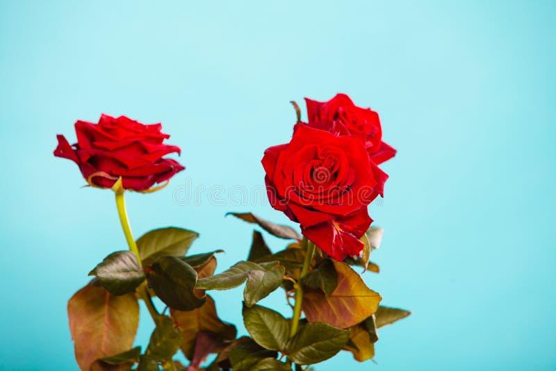 Boeket van tot bloei komende rode rozenbloemen op blauw royalty-vrije stock foto's