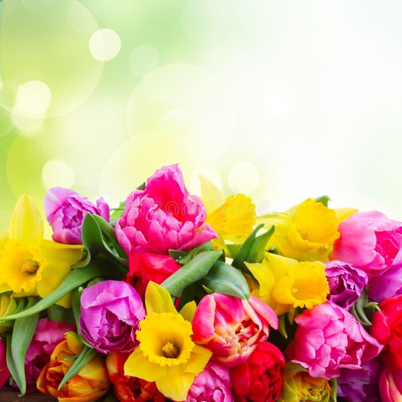 Boeket van tulpen en gele narcissen stock fotografie