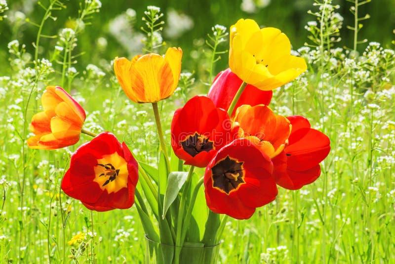Boeket van tulpen op het close-up van de de lenteweide stock afbeelding