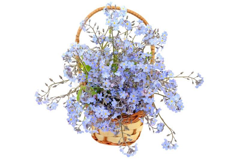 Boeket van vergeet-mij-nietjebloemen royalty-vrije stock afbeelding