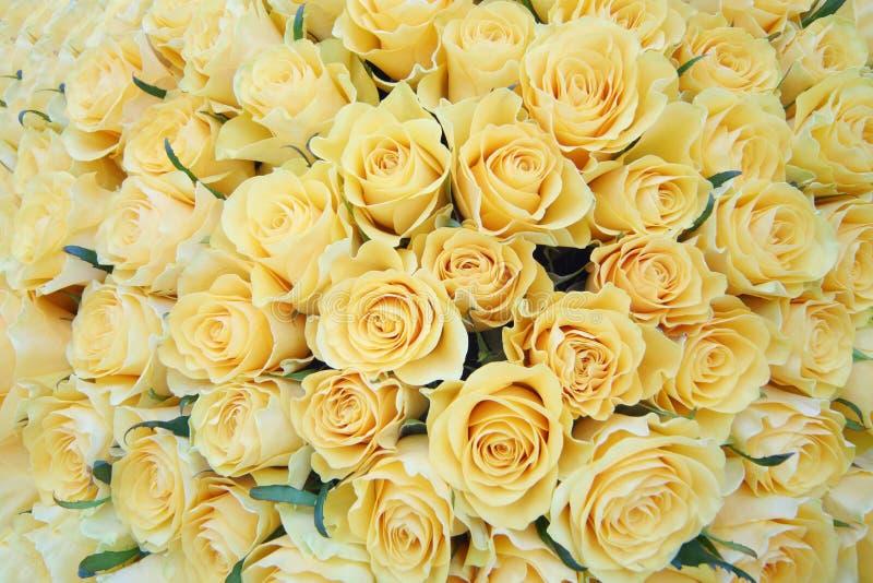 Boeket van vers gesneden grote mooie gele rozen. royalty-vrije stock fotografie