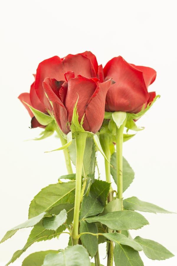 Boeket van verscheidene rode rozenverticaal stock foto