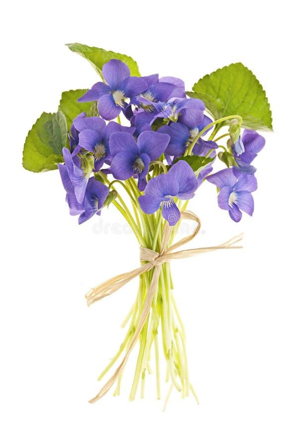 Boeket van viooltjes stock afbeelding