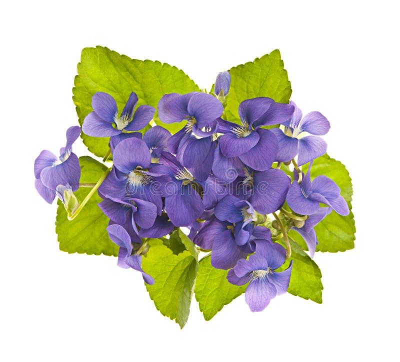 Boeket van viooltjes stock foto's