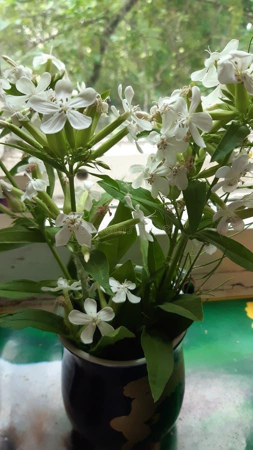 Boeket van wilde bloemen in een vaas op het venster royalty-vrije stock afbeelding