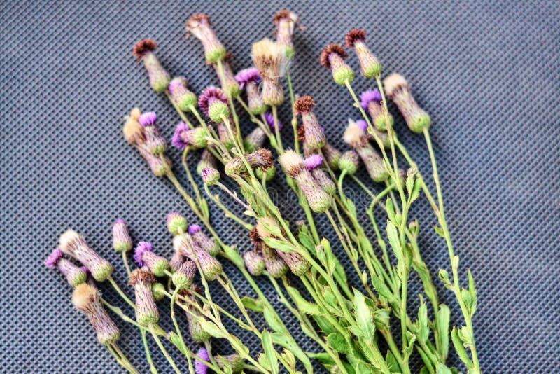 Boeket van wilde bloemen op lichte achtergrond Heldere kleurrijke de lentebloemen De bloemenachtergrond van de aard wilde weide L royalty-vrije stock foto