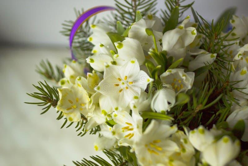 Boeket van witte bloemen Leucojum en naalden Vernum van Leucojum stock foto