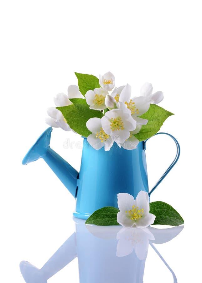 Boeket van witte jasmijnbloemen met bladeren in blauwe gieter royalty-vrije stock afbeeldingen