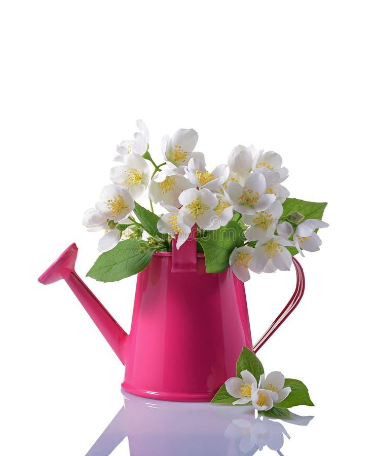 Boeket van witte jasmijnbloemen met bladeren in roze gieter royalty-vrije stock foto's