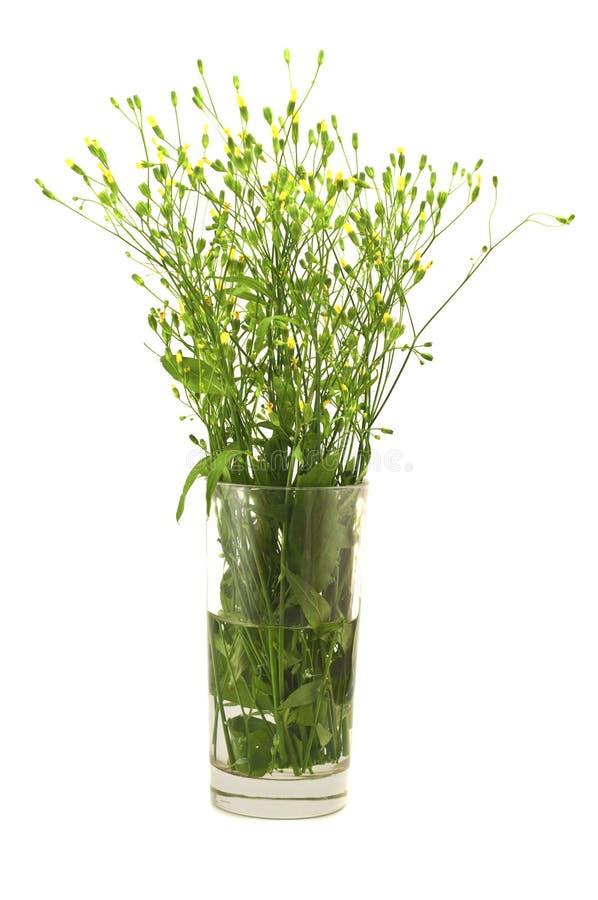 Boeketbloemen in een glas royalty-vrije stock afbeeldingen