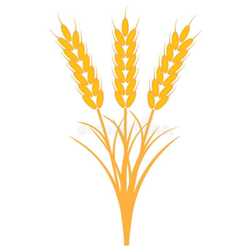 Boeketbos van oren van tarwe met de stammen en de bladeren van rijpe gele kleur, vector het concept de oogst van gewassen vector illustratie