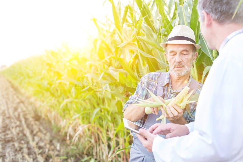 Boer die corncob toont aan wetenschapper met digitale tablet op boerderij stock fotografie